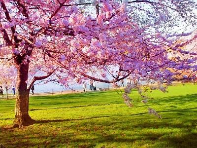Benvenuta primavera for Immagini desktop primavera
