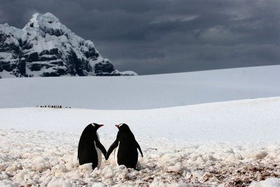 Cute Penguins Holding Hands